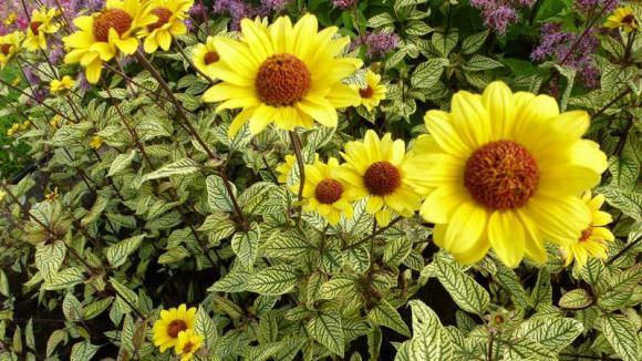 plante qui aime le soleil perfect echinacea with plante