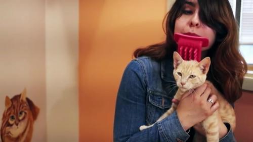"""""""On nous prend pour des quiches"""" : ces gadgets inutiles pour les chats"""