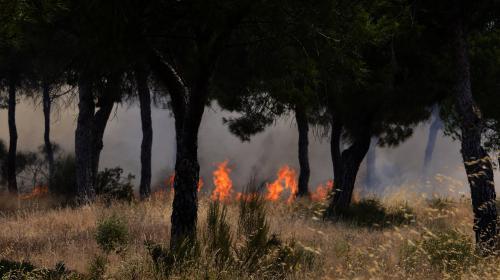 VIDEO. Espagne : au moins 1 800 personnes évacuées à la suite d'un incendie dans le parc naturel de Doñana