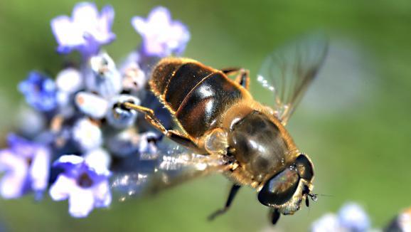 c 39 est ma sant les abeilles entre bienfaits et dangers. Black Bedroom Furniture Sets. Home Design Ideas
