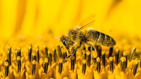 Miel : gare aux contrefaçons