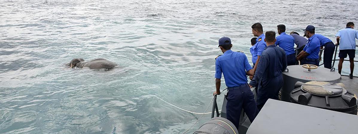 Des membres de la marine du Sri Lanka en train de sauver l\'éléphant, au large de Kokkilai (Sri Lanka), sur une photo diffusée le 12 juillet 2017.