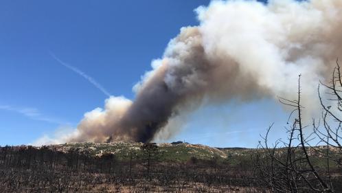 nouvel ordre mondial   Corse : 4 600 hectares partis en fumée