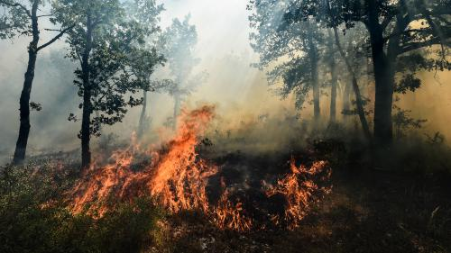 Bormes-les-Mimosas, La Croix-Valmer, Biguglia... Où en sont les incendies dans le Sud-Est ?