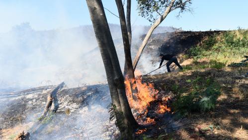 INFOGRAPHIE. Malveillance, accidents, mégots... Quelles sont les causes des incendies ?