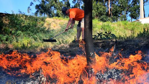 Bormes-les-Mimosas, Martigues, Carro... Où en sont les incendies qui dévastent le sud-est de la France ?