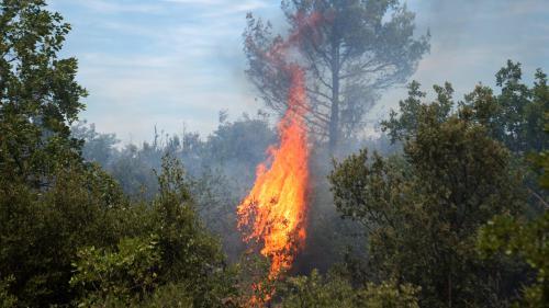 """DIRECT. Incendies dans le Var : le feu est """"stabilisé"""", mais """"non maîtrisé"""" à Artigues"""