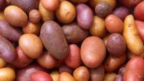 Nord : 70 salariés infectés de façon mystérieuse dans une usine de pommes de terre