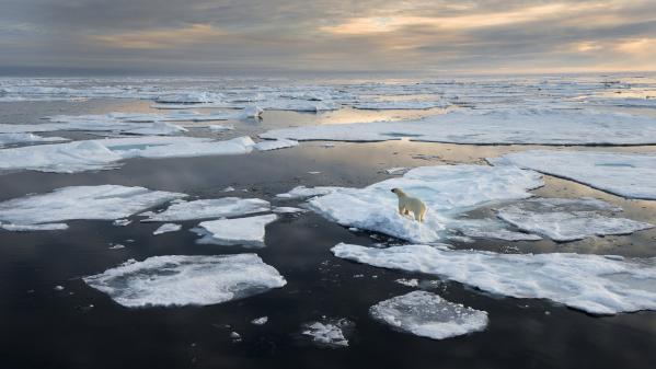 Russie : la vidéo d'un ours polaire à 800 km de son habitat naturel inquiète