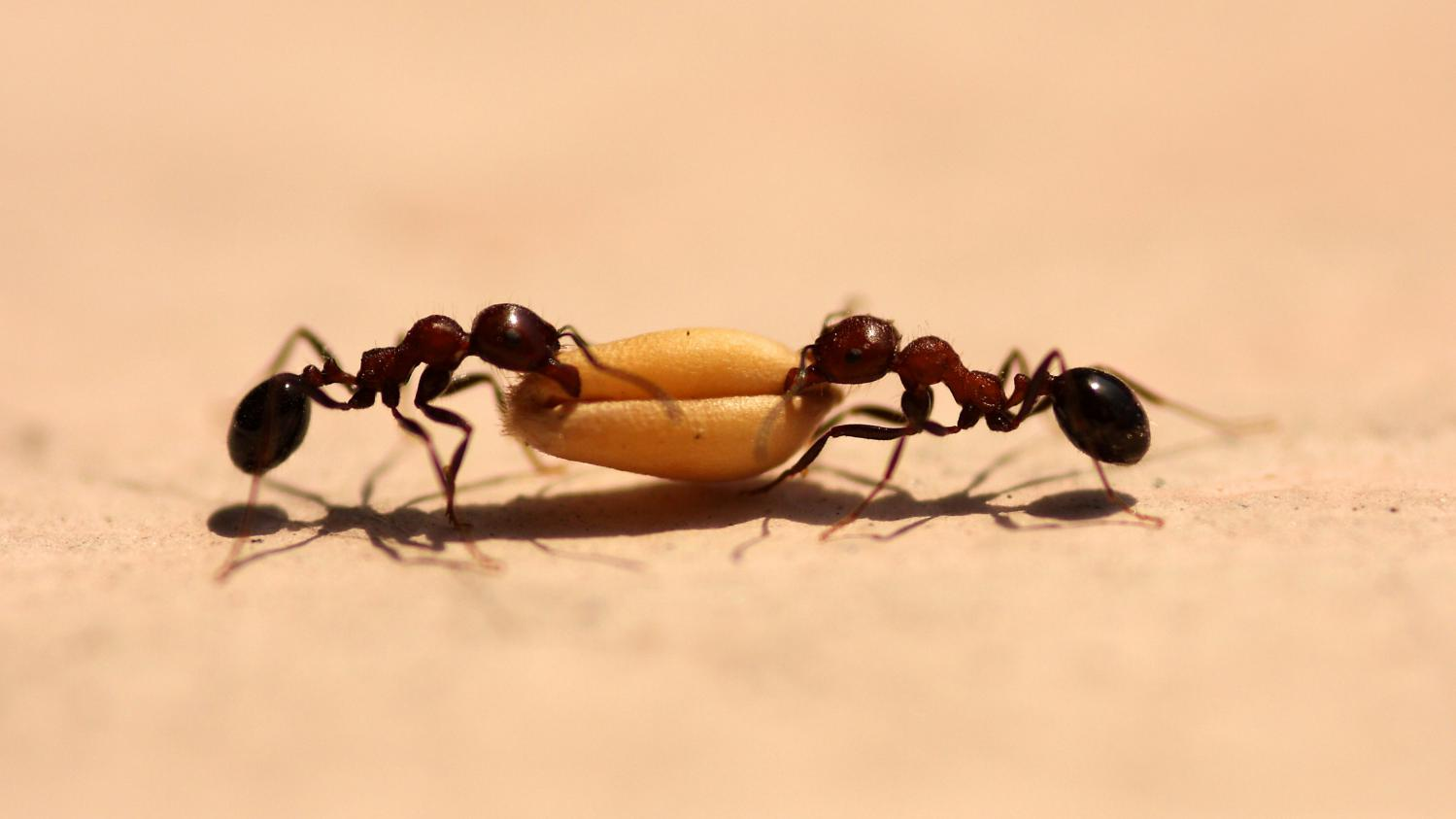 Eloigner Les Fourmis Au Jardin jardin. si les fourmis ne sont pas vos amies