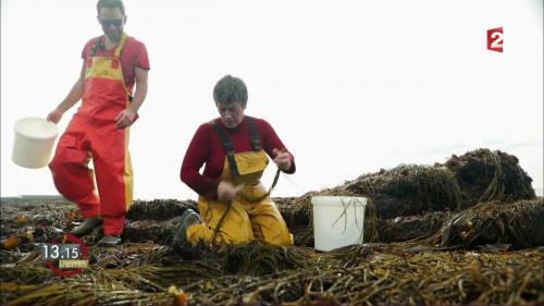 """VIDEO. """"13h15"""". A la pêche aux algues alimentaires bretonnes avec Scarlette"""