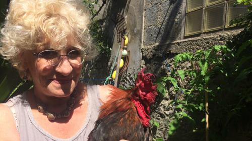 Sur l'île d'Oléron, les vacanciers veulent clore le bec de Maurice, le coq qui chante trop tôt pour eux