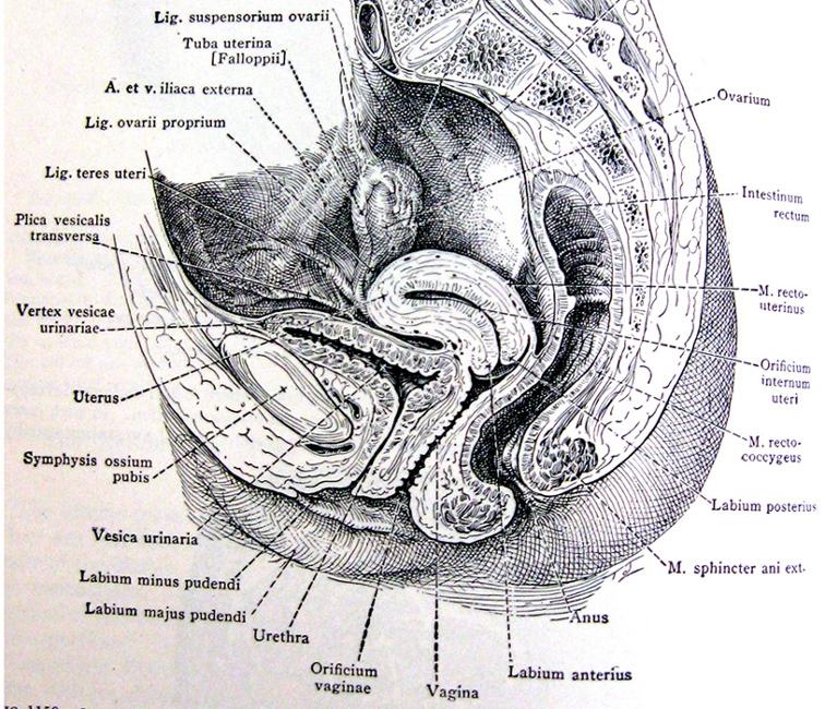 Black clitoris pictures