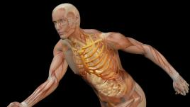 Sport : le corps humain a-t-il atteint ses limites ?