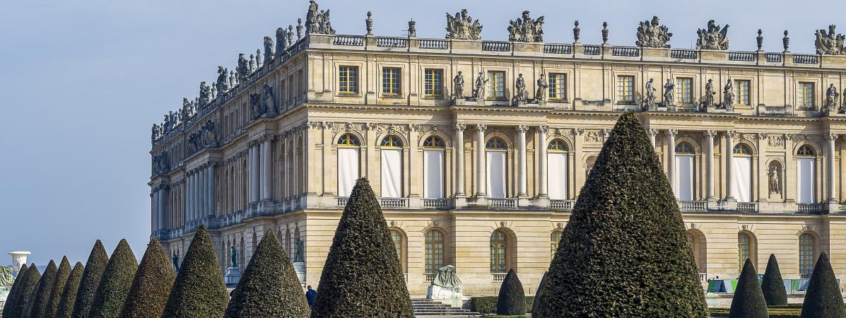 Versailles : des arbres admirables qui racontent l'histoire du château