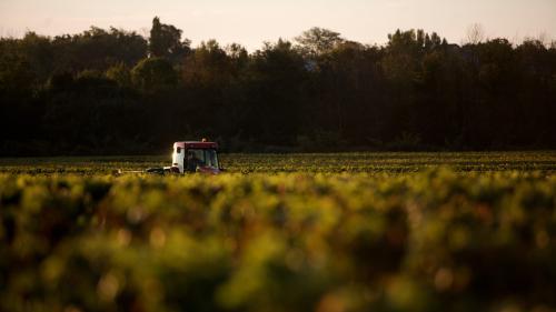 Ouvrier viticole mort d'un cancer : la justice rejette la demande de reconnaissance de maladie professionnelle