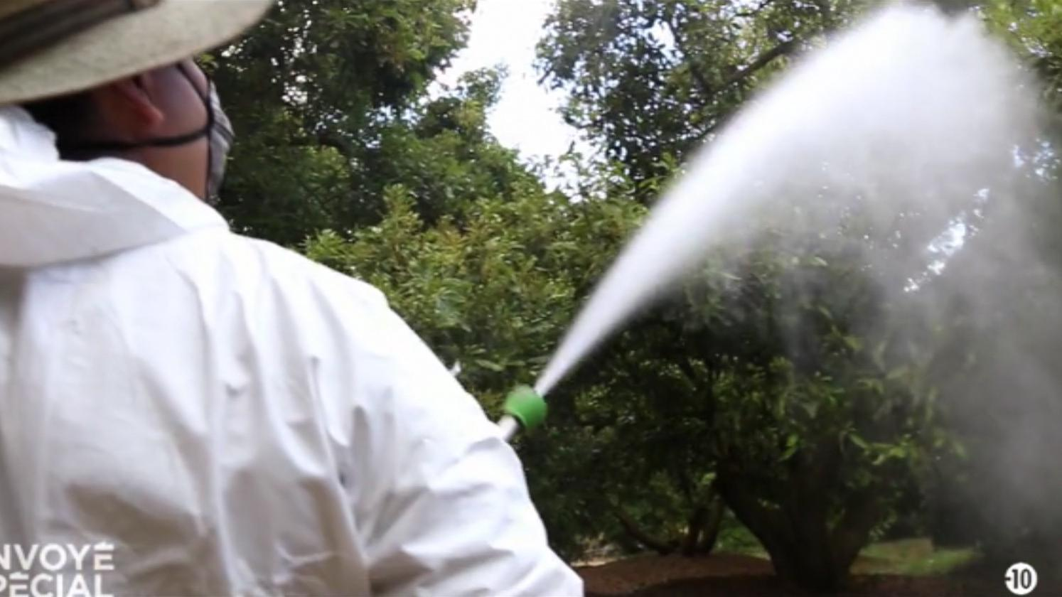 video les avocats du mexique bourr s de pesticides une catastrophe sanitaire. Black Bedroom Furniture Sets. Home Design Ideas