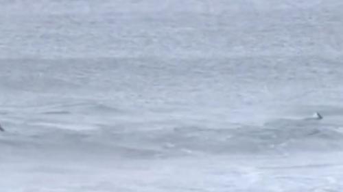 VIDEO. Norvège : trois orques nagent parmi les surfeurs lors d'une compétition