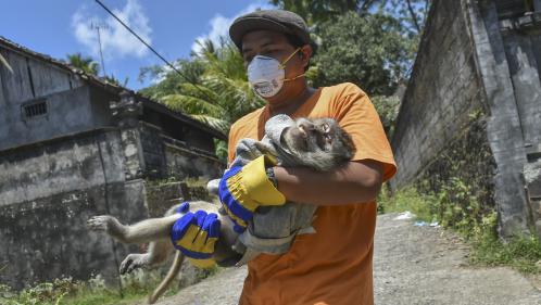 Bali : des bénévoles bravent le danger pour sauver des animaux menacés par un volcan
