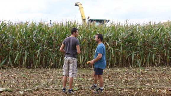 Florent Leportier (à gauche) et Côme Delaunay (à droite), devant un champ de maïs appartenant à l\'exploitation de Côme, le 27 septembre 2017 à Faverolles (Orne).