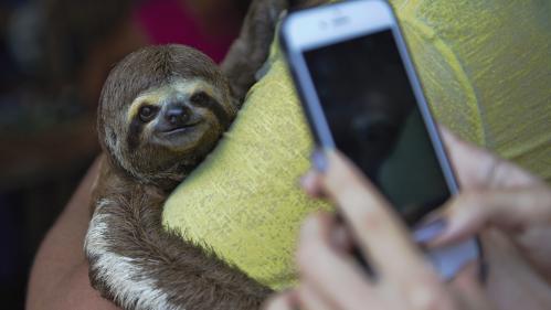 Une ONG alerte sur les dangers des selfies de touristes qui posent avec des animaux sauvages