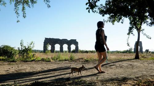 """Italie : une employée obtient un """"congé toutou"""" pour faire opérer son chien"""