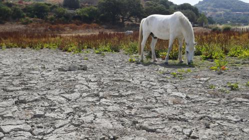 nouvel ordre mondial   Corse: record de longévité pour la sécheresse au sol,