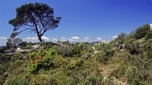 nouvel ordre mondial | Risques d'incendie dans le sud : des habitants inquiets du manque d'entretien des forêts