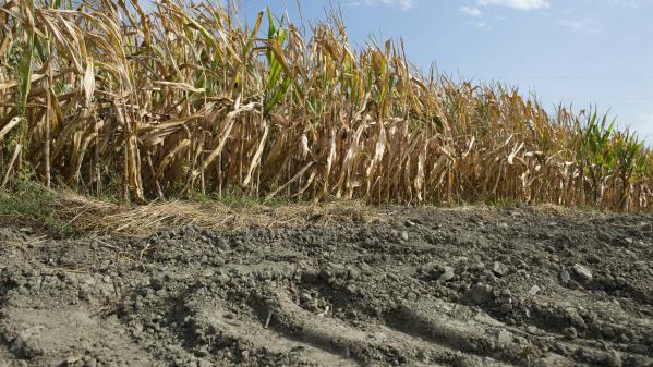 Agriculture : la sécheresse fait mal