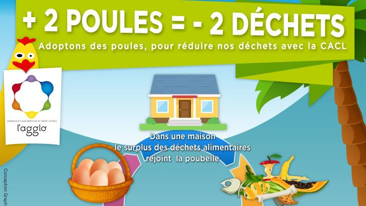le journal des outre mers en guyane lancement de l 39 op ration adopter des poules. Black Bedroom Furniture Sets. Home Design Ideas