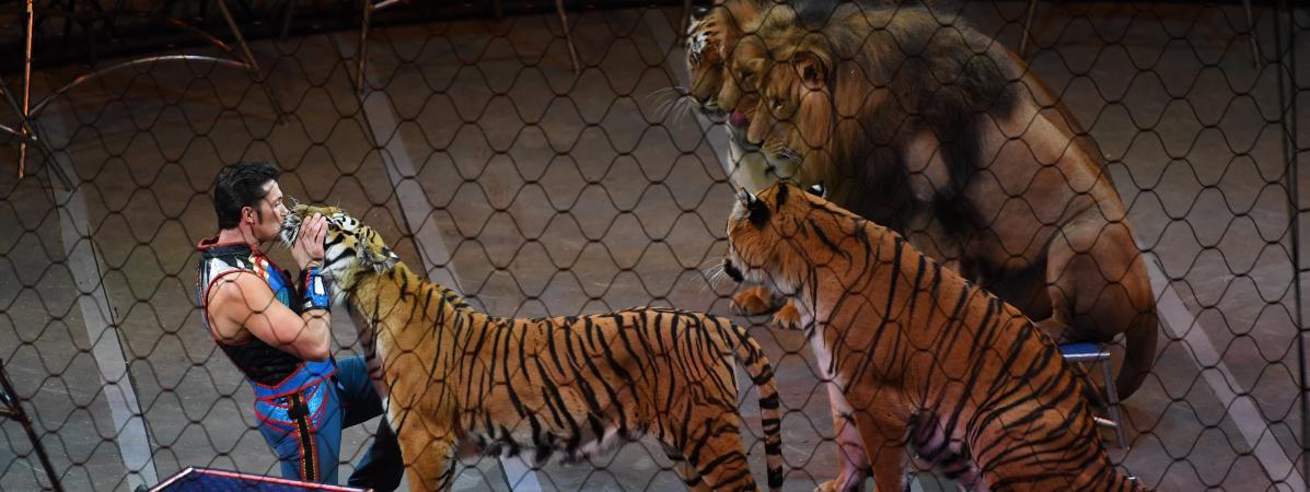 manifestation contre les cirques avec animaux sauvages dire qu 39 ils sont tous bien trait s. Black Bedroom Furniture Sets. Home Design Ideas