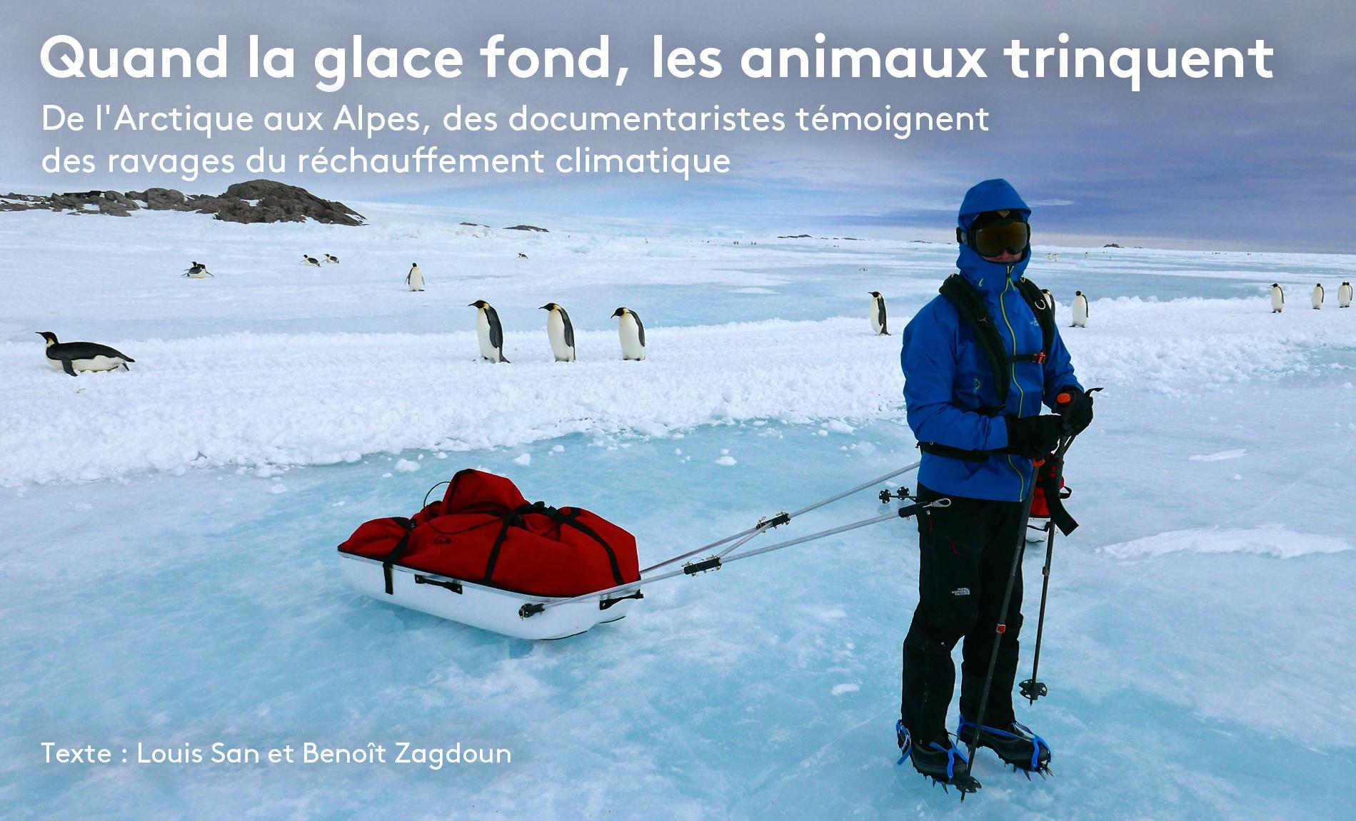 """Un membre de l\'expédition organisée par le réalisateur Luc Jacquet et son association Wild Touch pour le tournage du documentaire \""""Antarctica\"""" traîne son matériel sur la glace de l\'Antarctique en 2015."""