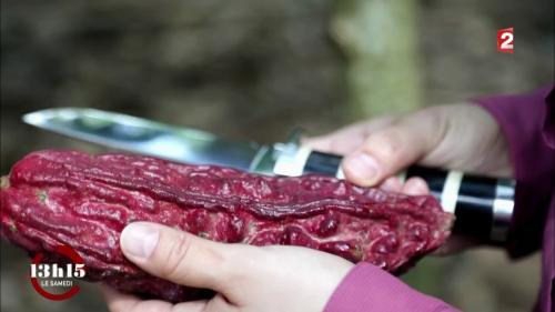 """VIDEO. """"13h15"""". L'un des plus anciens cacaos de la planète revit grâce à un maître-chocolatier français"""