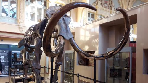 Un gigantesque squelette de mammouth vendu près de 550 000 euros aux enchères à Lyon