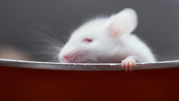 le brief politique dans les minist res la chasse aux rats et aux souris est ouverte. Black Bedroom Furniture Sets. Home Design Ideas