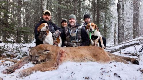 """""""Quel type écœurant !"""" : un animateur télé canadien tue un puma pour le cuisiner et suscite la controverse"""