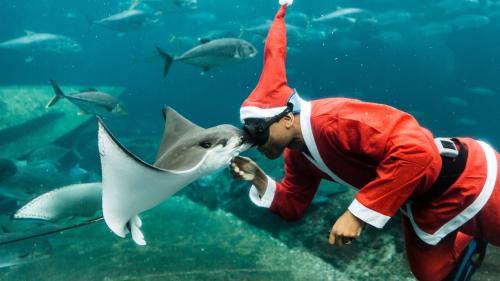 EN IMAGES. A ski, à moto ou à dos de chameau: le père Noël est partout (même au fond des aquariums)