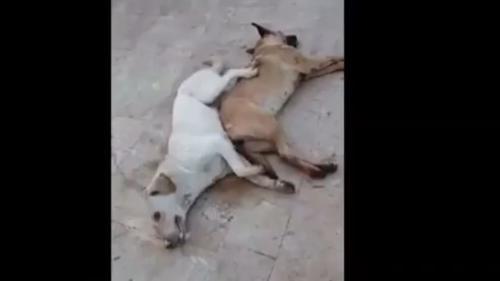 Liban : une vidéo de chiens errants empoisonnés par des employés municipaux provoque un tollé dans le pays