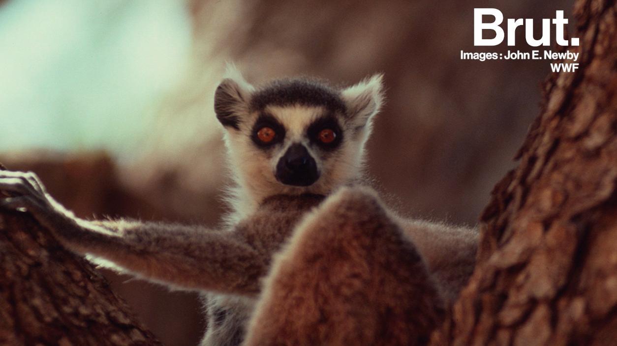 Extrêmement À Madagascar, « si le taux de déforestation reste constant, il n'y  DB54