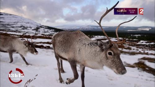 VIDEO. Canada : les rennes du père Noël étudiés par une biologiste française dans la forêt boréale Nouvel Ordre Mondial, Nouvel Ordre Mondial Actualit�, Nouvel Ordre Mondial illuminati