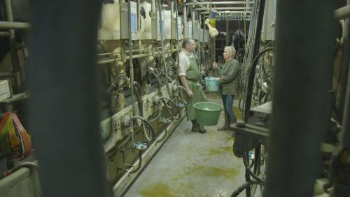 """DIRECT. Regardez l'enquête de """"Cash Investigation"""" sur les produits laitiers"""
