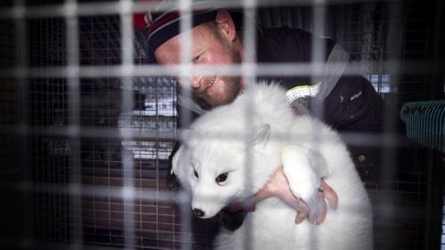 La Norvège va interdire les élevages d'animaux à fourrure d'ici 2025