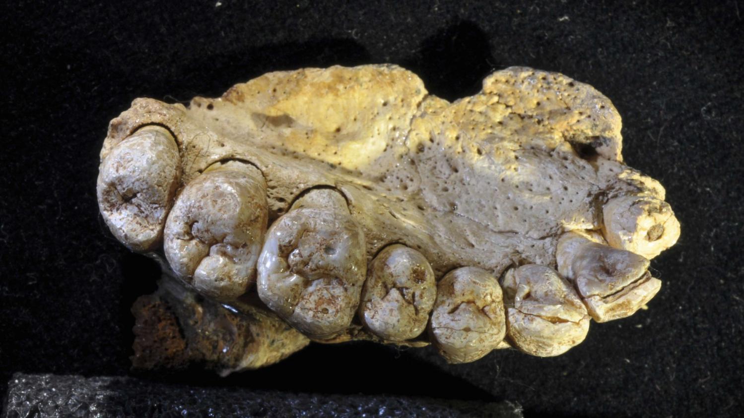 ce qui est datant de fossiles Profil de rencontres écrire