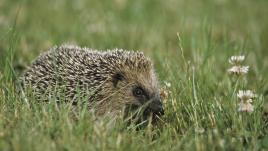 Activité humaine : les animaux sont en danger