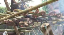 Thaïlande : 7000 soldats américains découvrent les joies du sang de cobra
