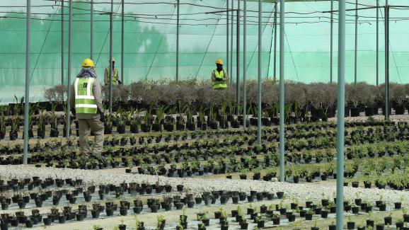 Qatar 16 000 arbres seront plant s pour la coupe du - Prochaine coupe du monde de foot 2022 ...