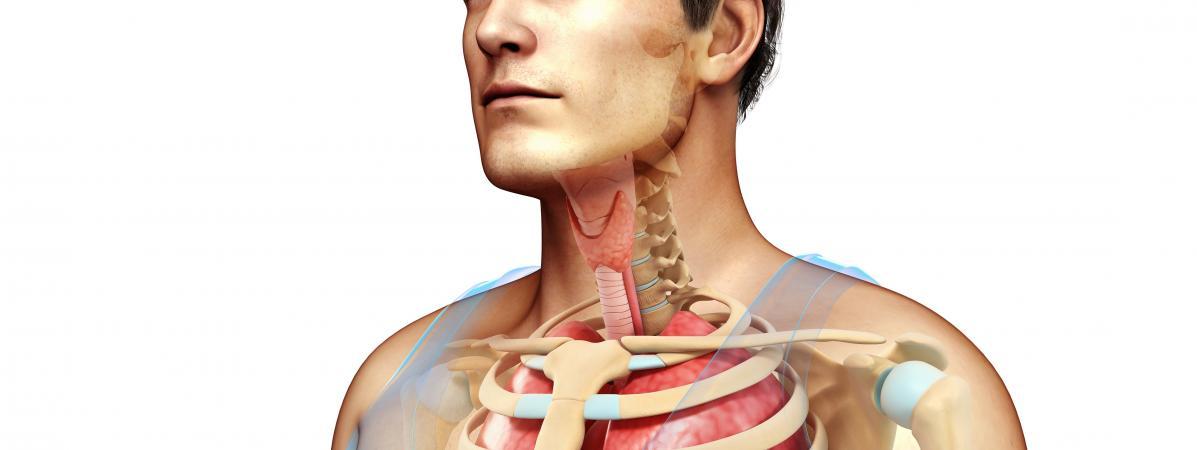 Une représentation d\'un corps humain.