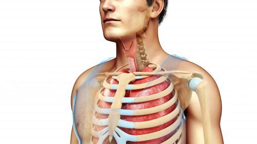 Vous pourriez vous passer de ces sept organes et continuer à vivre malgré tout