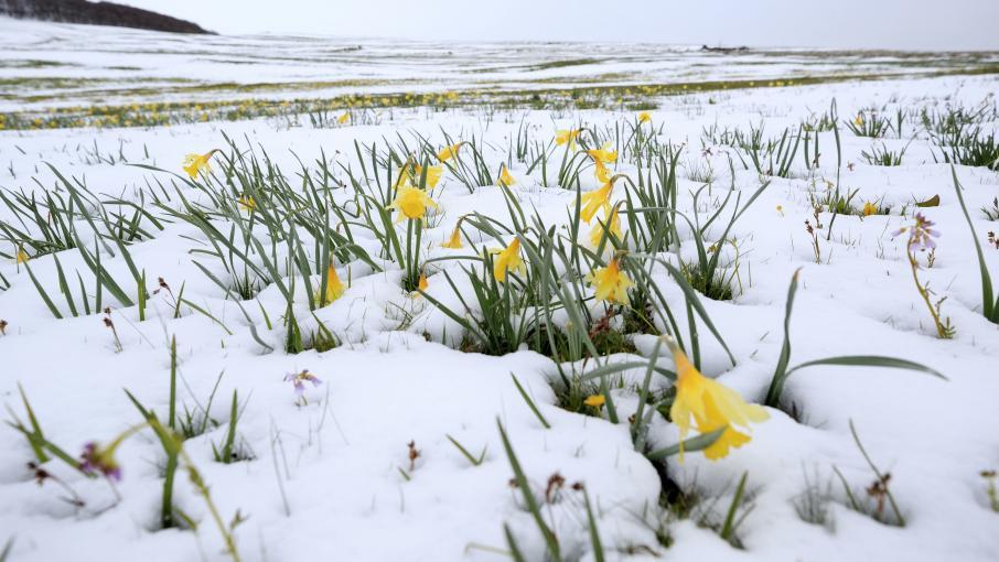 Vague de froid on va passer de l 39 hiver au printemps en une semaine pr vient m t o france - Taille du pecher au printemps ...