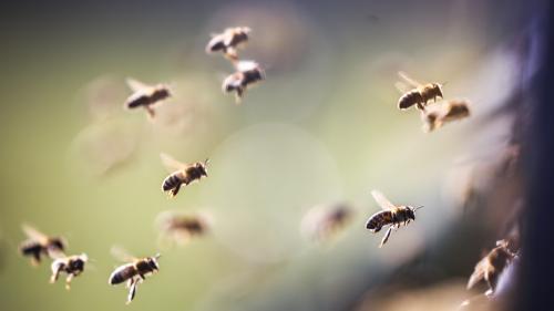 """Trois questions sur le thiaclopride, un insecticide """"tueur d'abeilles"""" dans le viseur des autorités"""